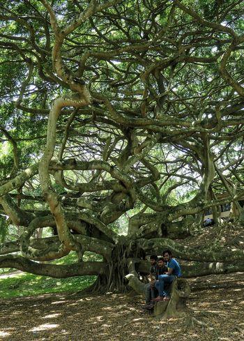 Jardin Secret Tree Trunk Tree Area Treescollection Tree_collection  Tree Men Branch Full Length
