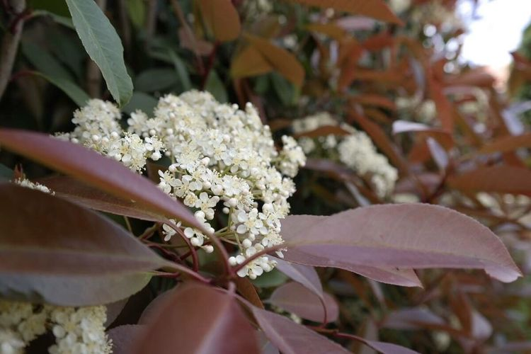 Nature Flowers Bokeh