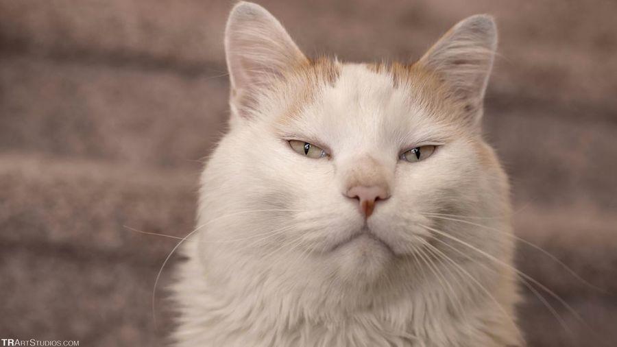 My Pussycat