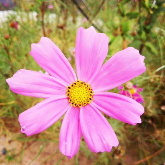 지프로2 Gpro2 Snap Daliy 일상 Flower 꽃 가을 Autunm