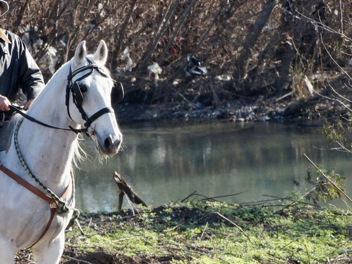 White horse and the river - Serchio River Horse Horse Portrait Livestock Nature Outdoors Serenity Tranquil Scene Tranquillity White Horse White Horse And The River White Horse Portrait Working Animal Pet Portraits