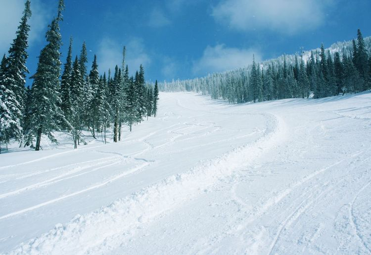 Ski resort Sheregesh Tree Spruce Tree Snowing Snow Cold Temperature Mountain Winter Forest Polar Climate Fir Tree