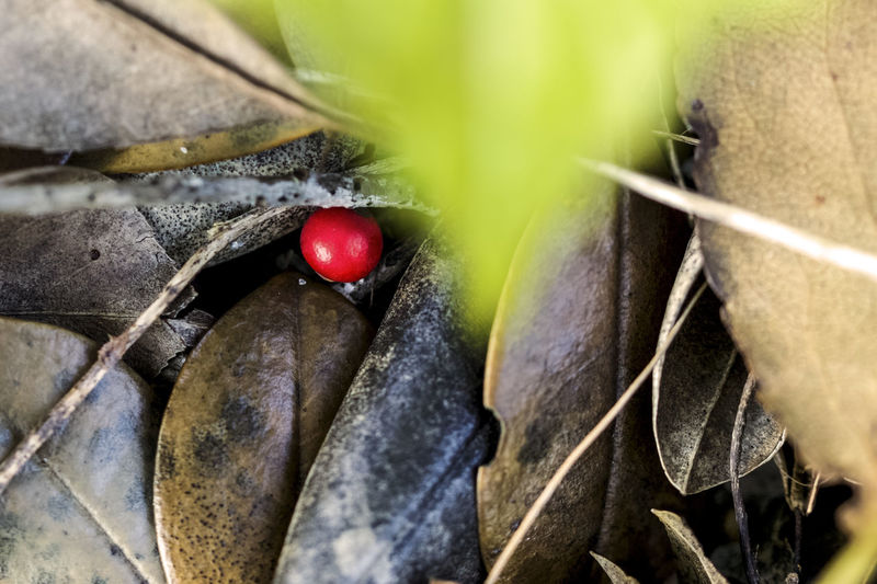 Look deep Beauty In Nature Berries Close-up Hidden Gems  Macro Nature Nature Photography Red Tadaa Community