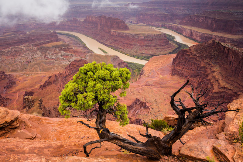 High Angle View Of Trees In A Desert