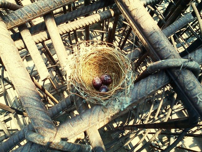 Nest Egg Nature's Diversities Life Resistance  Fight Lessons In Life Learn Humbled Defy Nature Believe