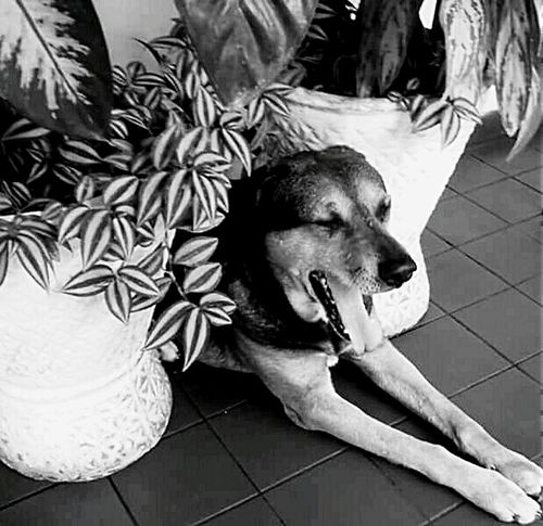 EyeEm Dogs Relaxing Relaxing Moments Animals Prettys Mascotas 🐶 Friend Photos Nature Photography First Eyeem Photo EyeEm Best Shots - Black + White EyeEm Animal Lover VSCO Gallery Black And White Photography Cute Cute Dog  Cute Animals