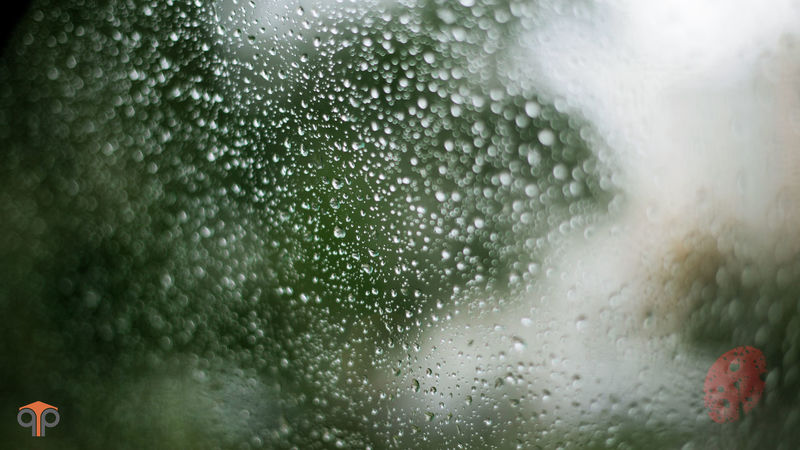 Close-up Day Drop Fragility Freshness Glass - Material Nature No People Outdoors Rain RainDrop Raindrops Rainy Days Refreshment Water Wet Window Glass Focus Object