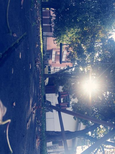 Sun Sunny Sunlight Outdoors