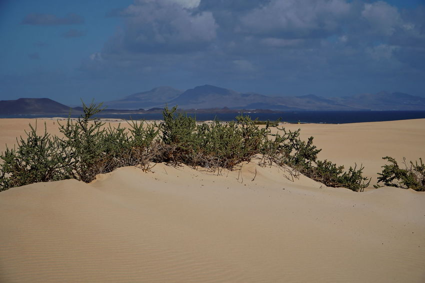 c7 Fuerteventura Arid Climate Beauty In Nature Cloud - Sky Corralejo, Fuerteventura Day Desert Landscape Mountain Nature No People Outdoors Remote Sand Sand Dune Scenics Sky Tranquil Scene Tranquility Tree Water