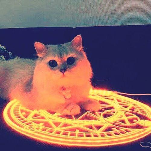 Evil Cat e.e
