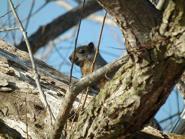 Squirrel Wild Life