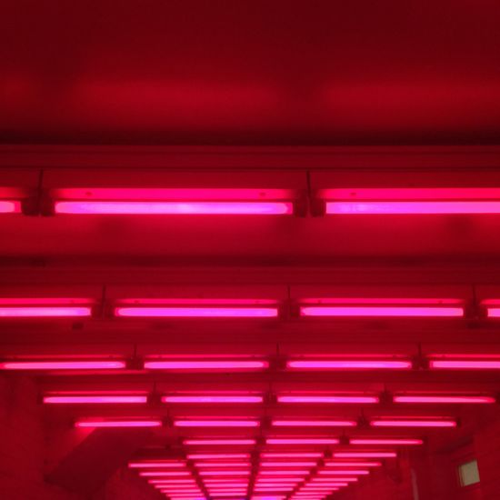 Close-up Full Frame Geometry Glowing Horizontal Symmetry Illuminated Indoors  Modern Neons Repetition Symmetry Technology All The Neon Lights