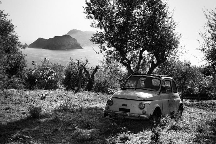 Fiat 124 Spider History Car Old Fiat Olive Tree Capri Car Coast Day History Italy Land Land Vehicle Mode Of Transportation Motor Vehicle Nature No People Old Fiat Uno Oldtime Oldtimer Outdoors Plant Transportation Tree Tree And Car Vintage Car