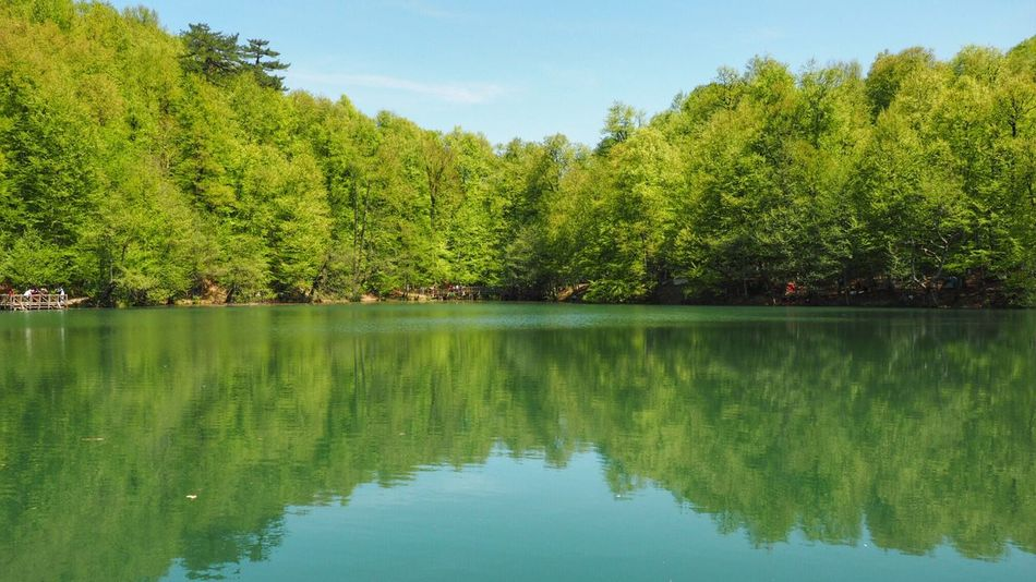 Tree Reflection Water Tranquil Scene Nature Beauty In Nature Scenics Tranquility Green Color Lake Waterfront Outdoors Growth No People Day Sky Idyllic Mountain Wildlife Wild Fresh Air... Pure The Great Outdoors - 2017 EyeEm Awards Perspectives On Nature