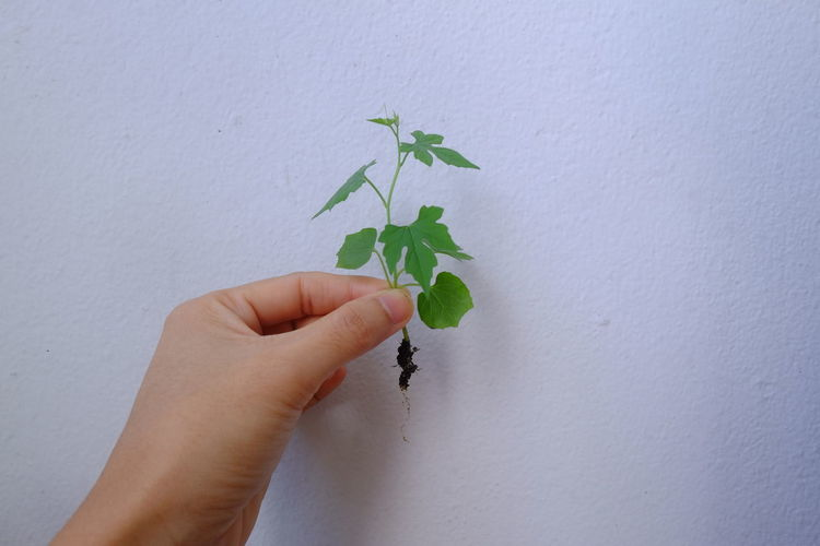 Close-up of hand holding small plant against wall