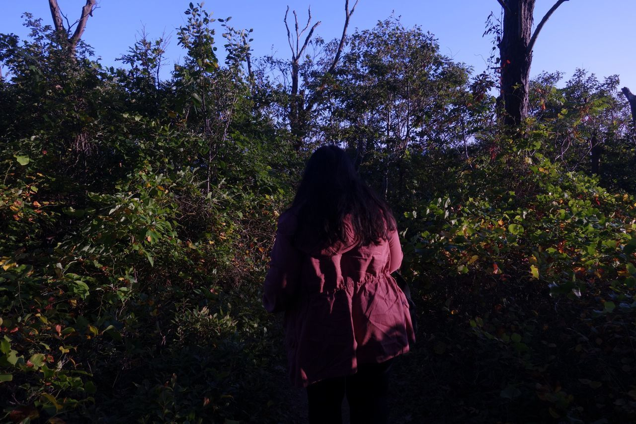 tree, rear view, real people, standing, nature, outdoors, growth, day, forest, one person, women, sky, people