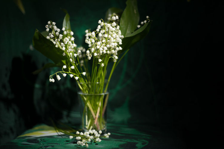 the Spring has come... EyeEmSelect Flowering Plant Freshness Green Color Growth Plant WeekOnEyeEm Beauty In Nature Close-up Flower Fragility Indoors  Leaf Lily Of The Valley Maylily No People Vulnerability