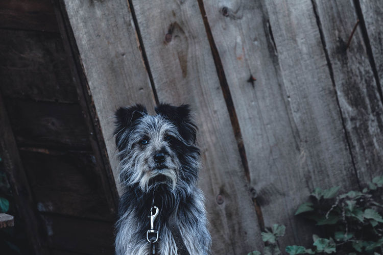 Dogs portrait. 🐶 Dog Portrait Dark Nature Photography Canon Countryside Life Cute Animal Green Naturelovers Wood Grass Beautiful Beauty In Nature Beauty Canon Amazing Travel Grey Explore Walk Close-up Architecture