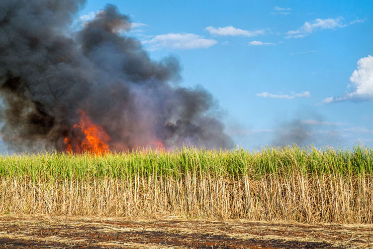 Fired Accidents And Disasters Agriculture Air Pollution Burning Cloud - Sky Day Environment Environmental Issues Field Fire Fire - Natural Phenomenon Grass Heat - Temperature Land Landscape Nature No People Outdoors Plant Pollution Power In Nature Rural Scene Sky Smoke - Physical Structure Sugar Cane Field