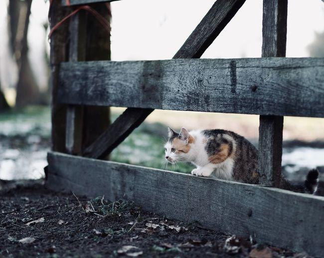 Cat sitting on bench