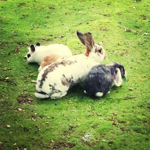 Rabbits in Umweltgarten Neubiberg WeatherPro: Your Perfect Weather Shot