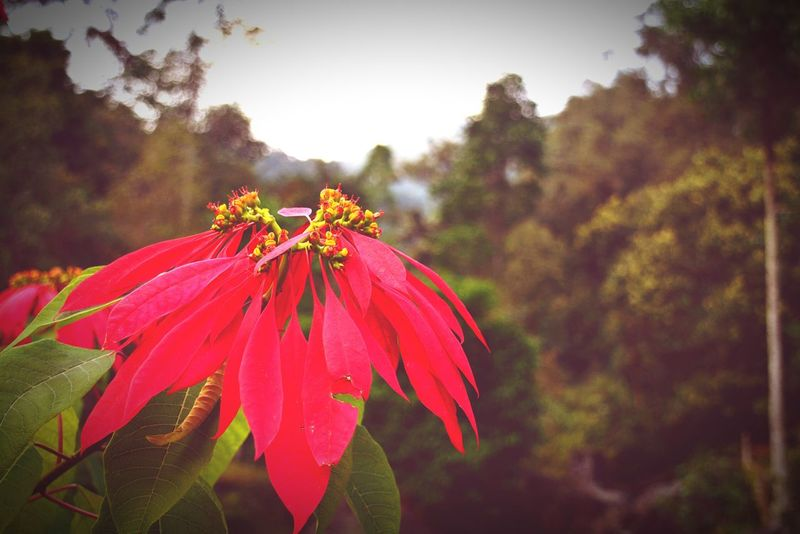 Flower Nature Nature Photography Beauty In Nature Potrait Lataguri Forest Traveling Taking Photos Dooars__trip Natural