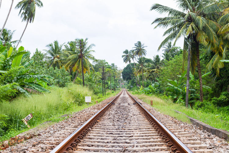 A view of a colonial railway line in the south of Sri Lanka. Tree Plant Palm Tree Tropical Climate Rail Transportation The Way Forward Track Railroad Track Nature Direction Transportation Green Color Diminishing Perspective Growth Day No People Sky vanishing point Beauty In Nature Outdoors Coconut Palm Tree Parallel Mirissa Sri Lanka