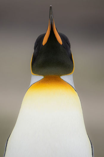 Close-up of penguin