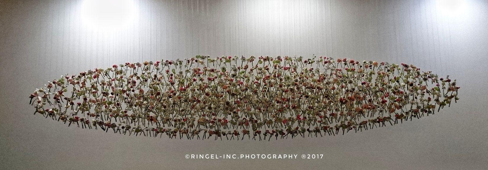Flying flowers. Illuminated Hanging Out Nature Fooling Around ^_^ Taking Photos Enjoying Life Snapseed Creativity Luxury Hello World Getting Inspired