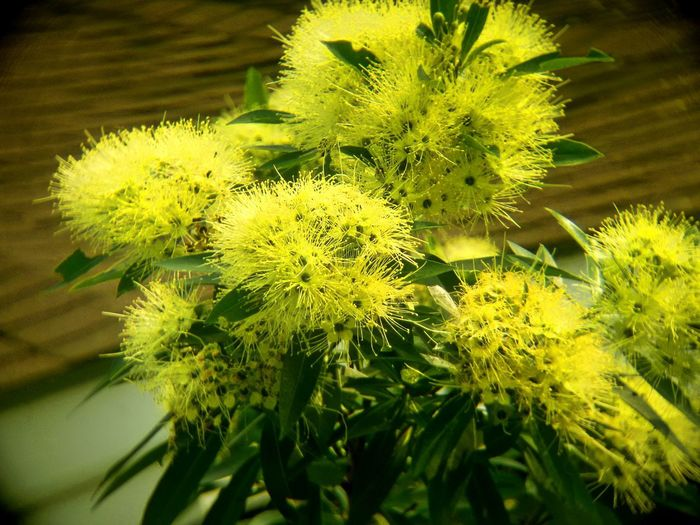 Beauty In Nature Close-up Day Flower Flowering Plant Focus On Foreground Freshness Green Color No People Outdoors Plant Selective Focus Yellow