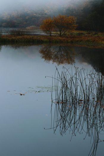 天気が気になる1週間😅 Water Lake Reflection Nature Reflection Lake Grass Floating On Water Beauty In Natureおはよう😊今週も頑張ろ💪😁