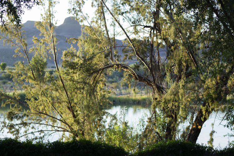 Orange River Beauty In Nature Day Forest Growth Lake Namibia Namibia Ri Nature No People Orange River Outdoors Peace Peace And Quiet Reflection River Sky South Africa South Africa Rive Tranquility Tree Water