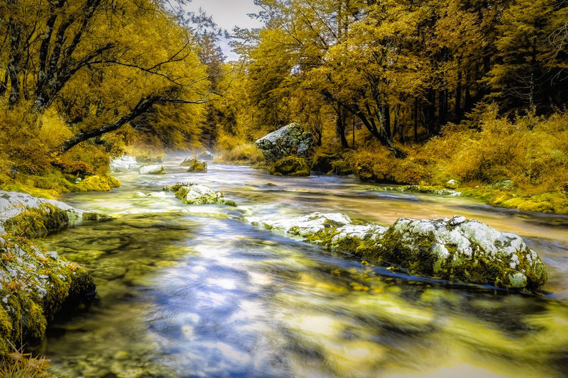 River Yellow