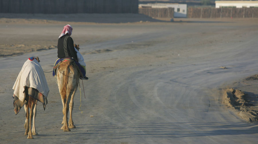 Rear view of man riding camel on dirt road