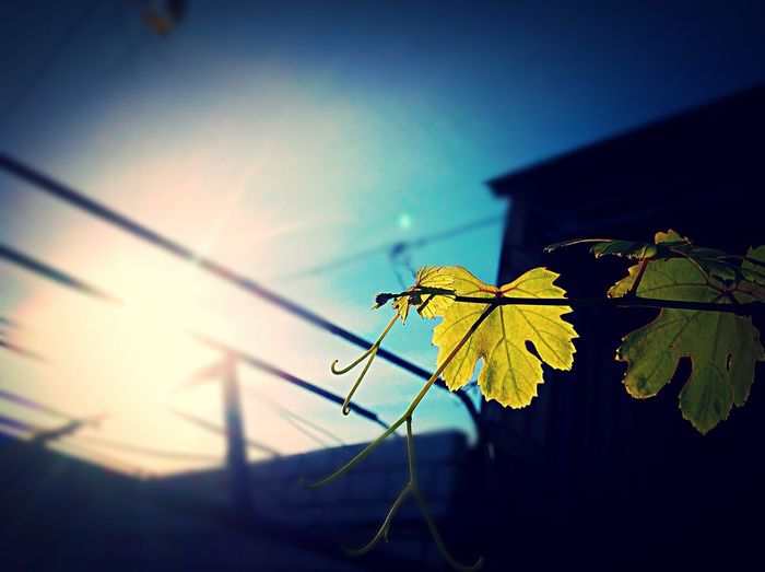 Grape Autumn Is Coming Village Life First Eyeem Photo