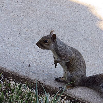 Nature on my doorstep 😄 Animal Animal Themes Animal Wildlife No People Day Animals In The Wild Squirrel High Angle View Close-up Nature