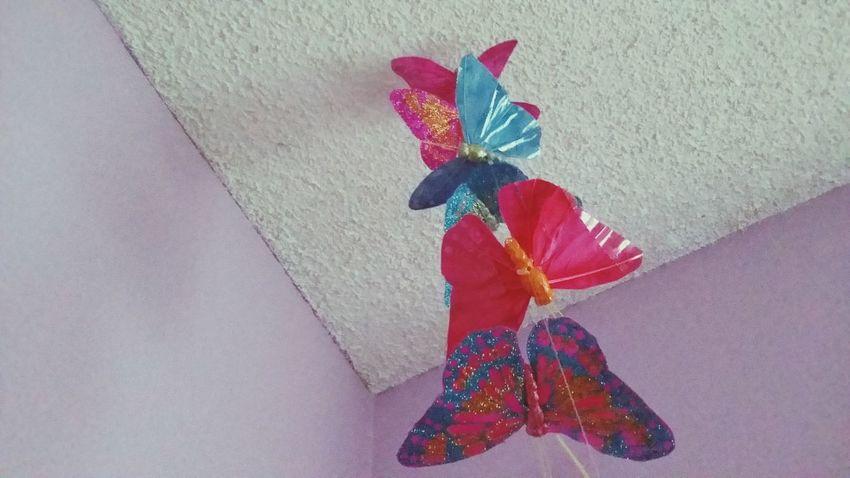 Flutter!!!!