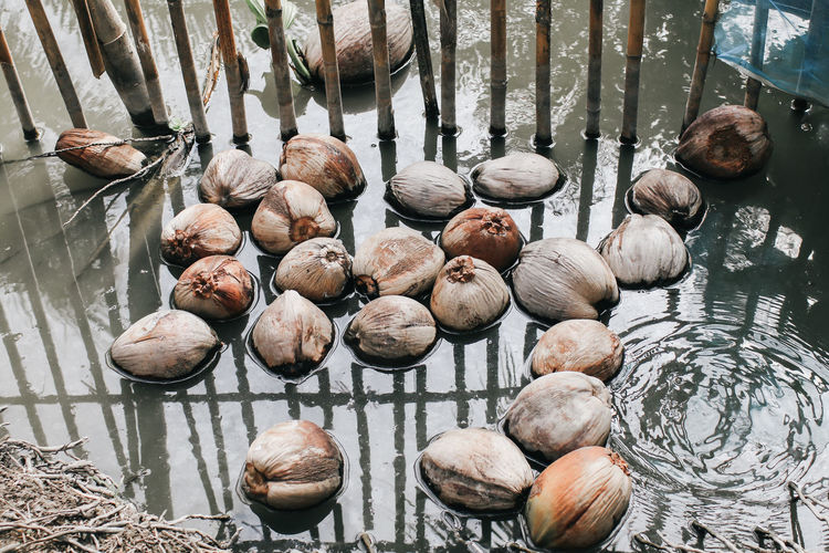High angle view of coconuts in water