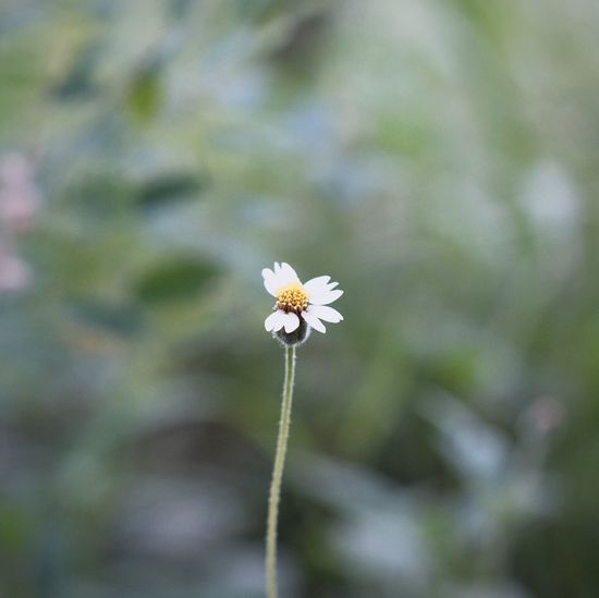 Flowering Plant Flower Plant Freshness Vulnerability  Fragility Beauty In Nature Nature No People Flower Head Outdoors Petal Springtime Focus On Foreground