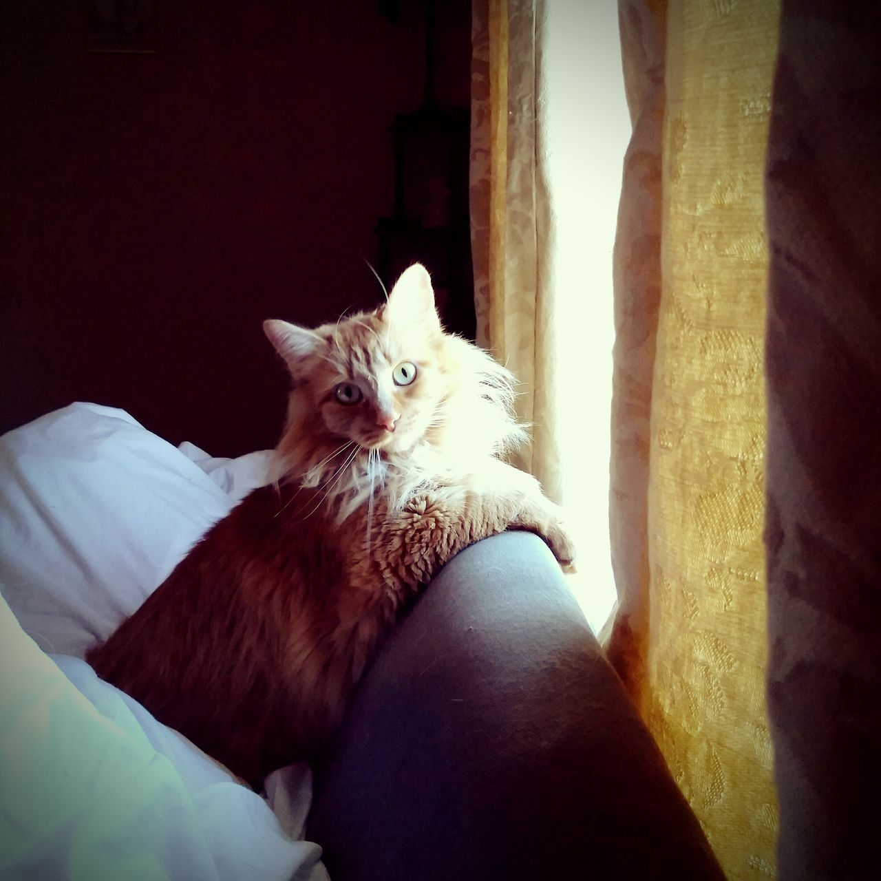 domestic cat, pets, domestic animals, one animal, mammal, animal themes, feline, indoors, sitting, relaxation, looking at camera, bed, portrait, one person, day, close-up