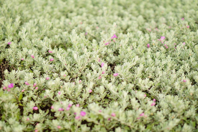 Soft such like a carpet Summer Relaxing Moments Exploring NatureOutdoors Plant No People Nature Green Color Multi Colored Tranquility Green Leaves Pattern Nature Art Backgrounds Fragility Textured  Bush Bushes And Flowers Spike Flower Bushy Park Beauty In Nature Flower Freshness Day Growth