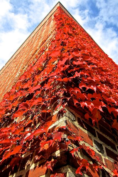 Fall Beauty Brick Building Ivy Fall Color Autumn In New England
