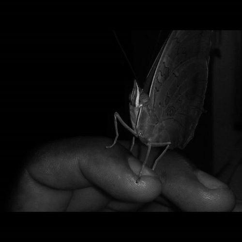 Mariposa Pose Beuteful Instalike Insecto Flowme