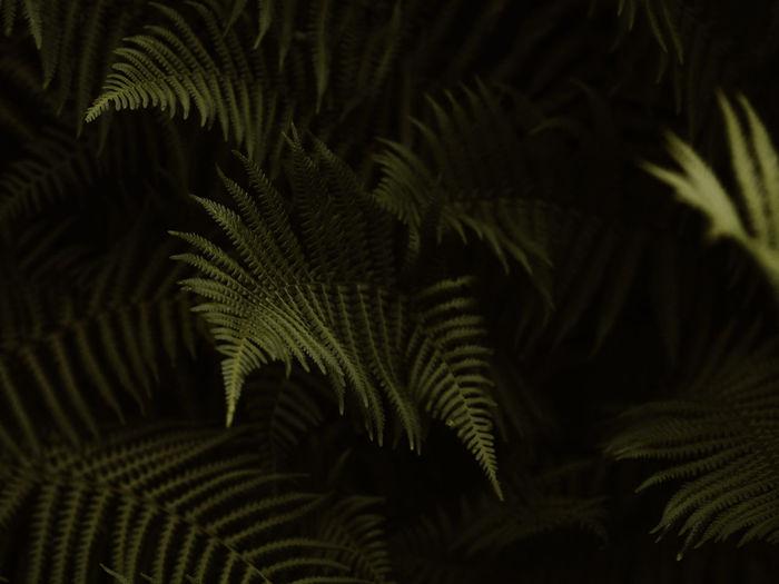 Dark and moody green ferns