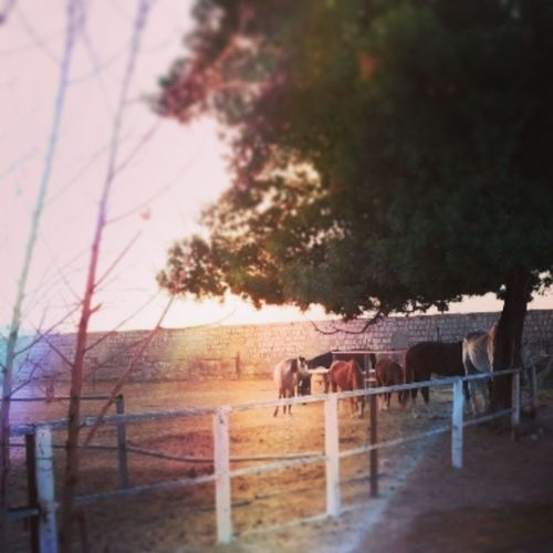 Hello people ?? Horseslovers Good Evening People love new small horses riyadh club beautiful colors nature instanature hot weather ??