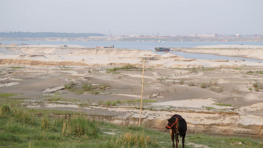 Heavy Siltation In River Padma