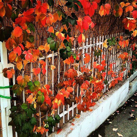 Autumn Colors BeautifulPic Autumnpic Eye4photography  EyeEm Best Shots Enjoying Life Urban Photography Urban Life EyeEm Nature Lover