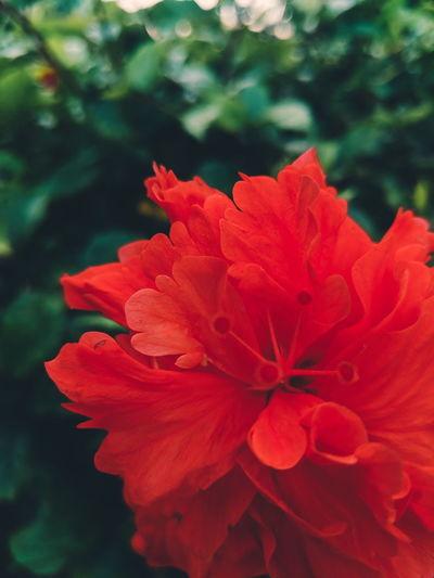 National flower