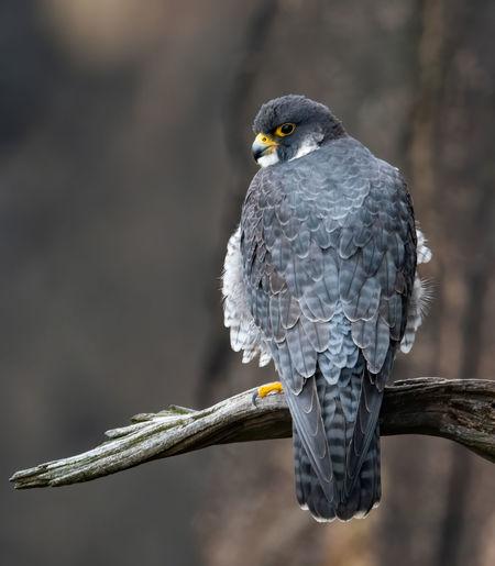 Rear view of bird perching on branch