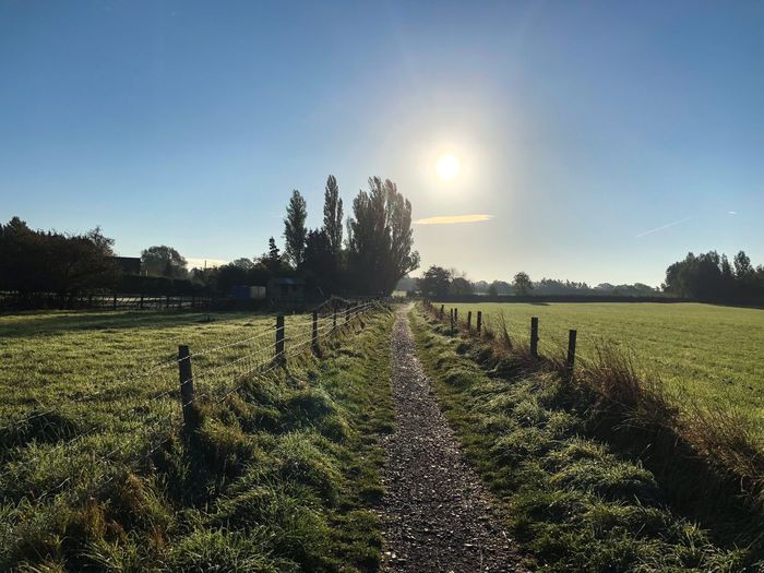 Early Morning Sun Path Sun Morining Sky Plant Landscape Tranquility Tranquil Scene Field Beauty In Nature Clear Sky Sunlight